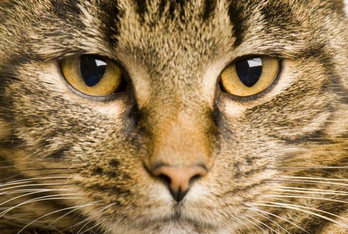 Land fördert Projekt zur Kontrolle der Populationen frei lebender Katzen mit 60.000 Euro