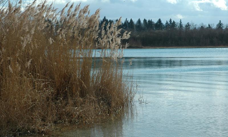 Büchenau See